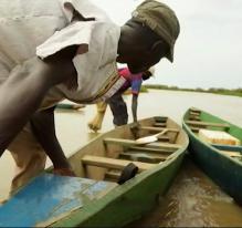 Le typha, un atout pour la Mauritanie?