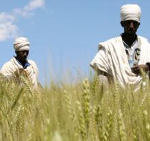 Terres agricoles : peut-on acheter un pays ?