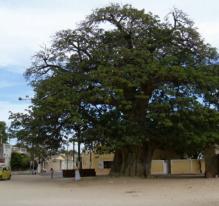 Le baobab, le taxi et le génie (Sénégal)