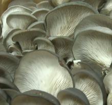 France : des champignons en ville