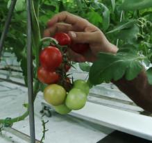 Canada : des salades sur les toits