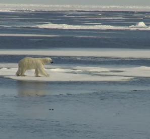 L'Arctique, la fin d'un sanctuaire