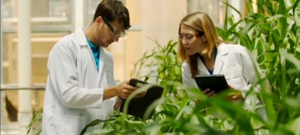 Tribunal Monsanto à la Haye